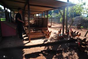 Visão geral do galinheiro